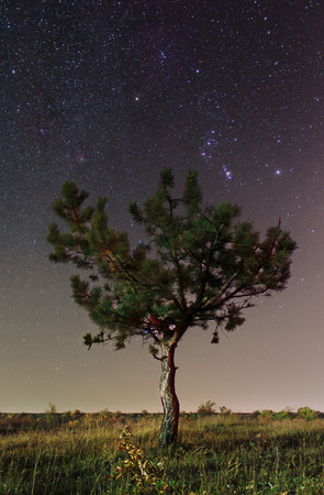 Starry sky in Krivoy Rog, Ukraine. Winter stars. Space photography. Isolated lonely pine tree on cosmic background. Imagens