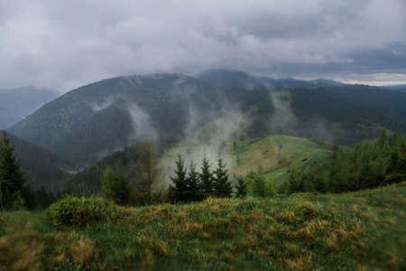 Nebeliger in Forest, North Carolina Gemäßigter Regenwald Morgen, Standard-Bild