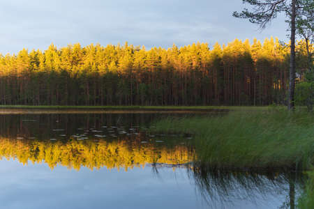 Beauty of the Northern nature: shaded lake shores and tops of pine tree forest lit with setting sun and reflected on the water surface. On the border of Russia and Finland.