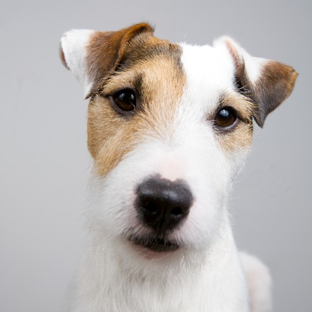 adorable dog on a white background Stock Photo