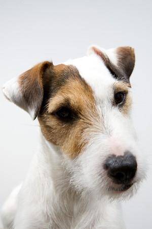thinking dog on a white background Stock Photo