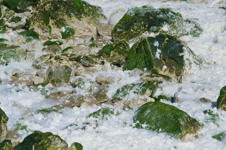 infiltration: seaweed on the beach of Cap Blanc-nez Stock Photo