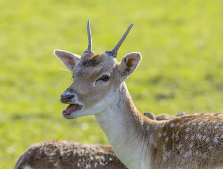succes: Small deer
