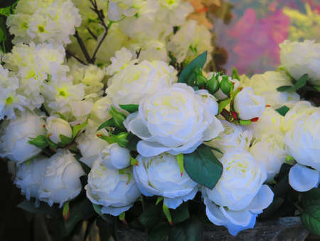 floriculture: View of some white roses