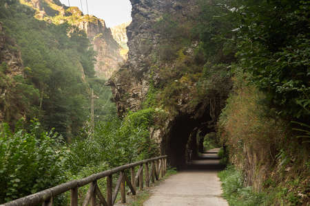 tunnel way in nature asturias spain 스톡 콘텐츠