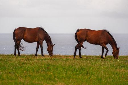 two horses eating atlantic landscape
