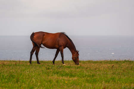 one horse eating atlantic landscape