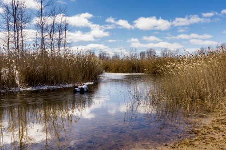 a marsh pond on a beautiful day in late winter