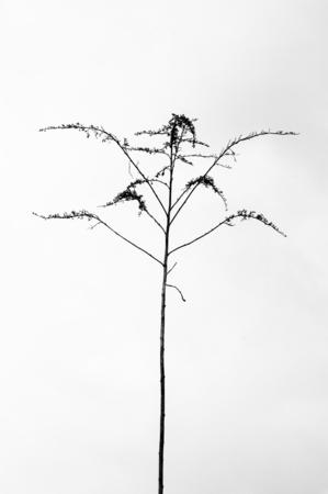 ascending: Fragile stalk of a grass plant ascending.