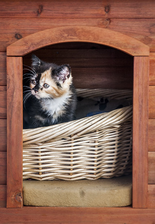 sneaks: Cute kitten sitting in the cottage peeking outside. Stock Photo