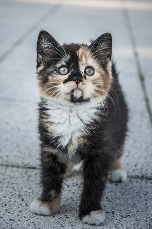 Cute kitten staying on the ground looking up.