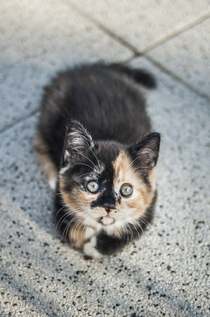 sneaks: Cute kitten lying on the ground looking up. Stock Photo