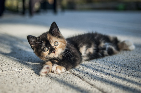 Cute kitten lying on the ground on a sunny day.