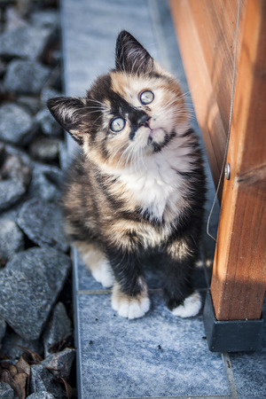 sneaks: Cute kitten sitting aside a cottage and looking up.