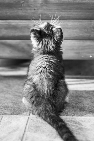 fondo para bebe: Cute kitten sitting and looking up in front of the cottage.