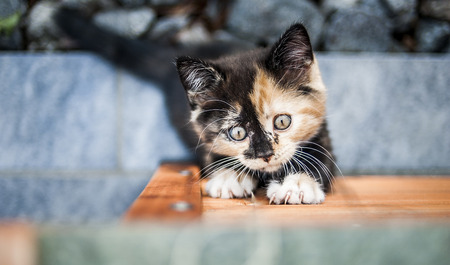 sneaks: Cute kitten looking up while climbing up the cottage. Stock Photo