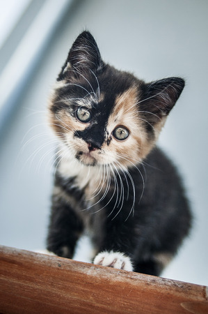 Cute kitten looking down from the roof of a cottage. Stock Photo