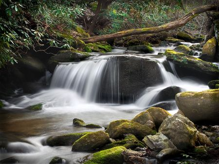 Blue Ridge Forest Stream fall With Milky  Effect Stock Photo