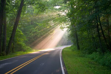 Road through forest with light beams and sun rays through green trees Stock Photo