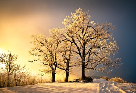 Ice and Frost Covered Oak Tree in Cold Winter Snow at Jump Off Rock In Western North Carolina Blue Ridge Mountains Stock Photo - 8752378