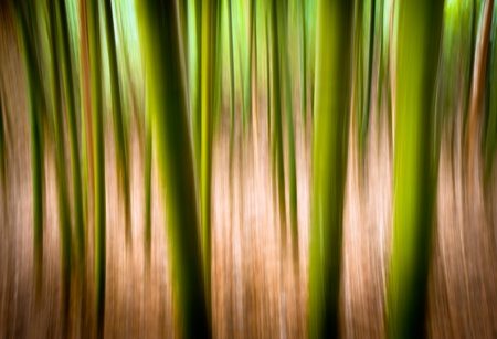 Abstract Nature Landscape Background Motion Blur Effect Bamboo Forest Texture with green and gold smeared colors Foto de archivo