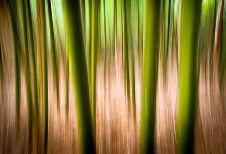 Texture Résumé Nature paysage arrière-plan Motion Blur effet bambou forêt avec des couleurs remaniées verts et or Banque d'images - 8987622