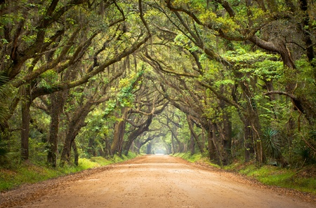 dirt road: Botany Bay Plantation Spooky Dirt Road Creepy Marsh Oak Trees Tunnel with spanish moss on Edisto Island, SC Stock Photo