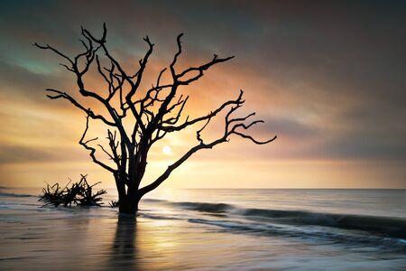 Bone Yard Sunrise at Botany Bay Beach on Edisto Island, SC w dead live oak tree driftwood in ocean waves Imagens