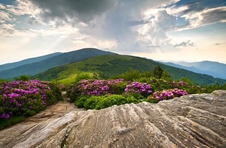tennessee: Rhododendron Bloom en paisaje esc�nico de picos de las monta�as Blue Ridge sendero de los Apalaches Roan Foto de archivo
