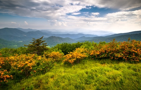 blue ridge mountains: Flame Azalea Blooms Blue Ridge Mountains Roan Highlands State Park on Appalachian Trail