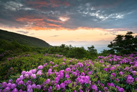 Blue Ridge Parkway Mountains Sunset over Spring Rhododendron Flowers Blooms scenic Appalachians near Asheville, NC Stock Photo