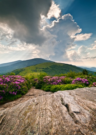 Blue Ridge Mountains Blooming Alpine Meadow Landscape at Roan Highlands with peak rhododendron flowers Stock Photo