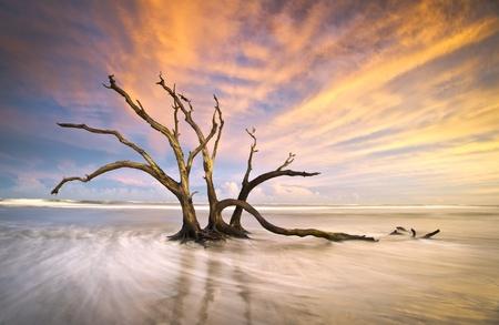 toter baum: Folly Beach Dead Tree Driftwood Ocean Sunset Charleston SC Landschaft Szene in South Carolina Lizenzfreie Bilder