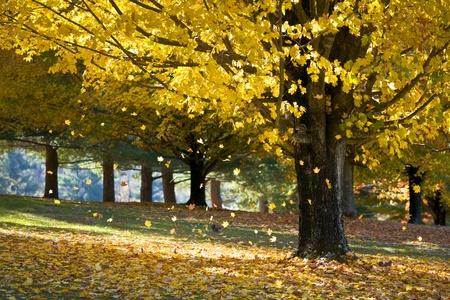 가을 단풍이 다람쥐와 아침 햇빛과 가을에 나무에서 떨어지는 단풍 노란색
