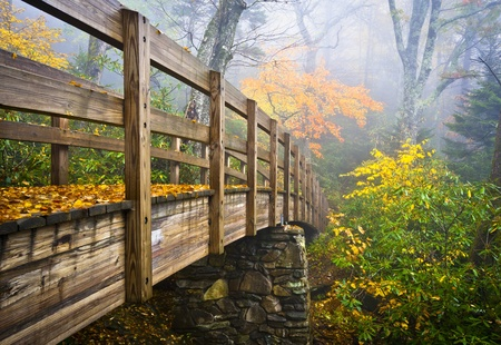 blue ridge mountains: Autumn Appalachian Hiking Trail Foggy Nature Blue Ridge Fall Foliage Bridge near Grandfather Mountain
