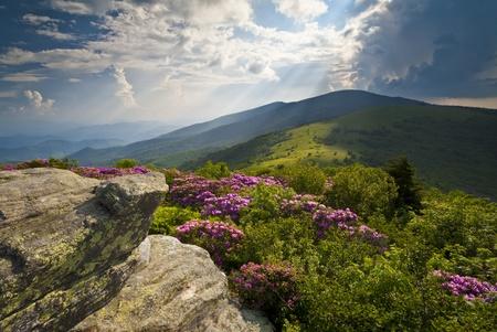 tennesse: Montañas Apalaches Roan Bloom Rhododendron en Blue Ridge fotografía de paisaje escénico Picos