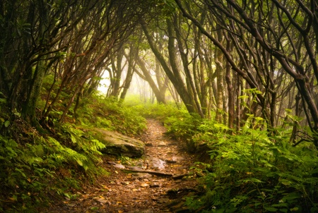 nc: Craggy Gardens Appalachian Hiking Trail Fog Blue Ridge Parkway near Asheville NC in Western North Carolina Stock Photo