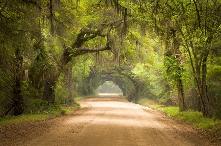 camino de tierra: Charleston SC Dirt Forest Road Botany Bay Plantation espa�oles Moss Edisto Island Deep South Live Oak Trees