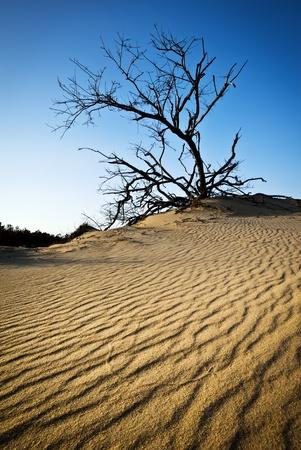 nags: OBX Rippled Sand Dunes Jinetes Tree Ridge, Carolina del Norte Outer Banks Nags Head State Park de Carolina del Norte Foto de archivo