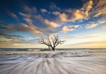 Charleston SC Coast Botany Bay Ocean Oak Tree Edisto Island Boneyard Beach Ace Basin South Carolina Stock Photo