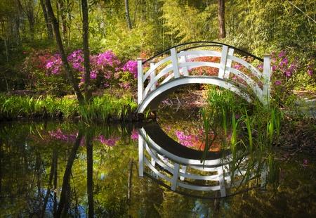 피는 봄 진달래 꽃 정원 연못 자연 사우스 찰스턴 SC 평화로운 꽃 반사