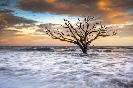 carolina del sur: Botany Bay Island SC Edisto Beach Boneyard puesta de sol paisaje Charleston Carolina del Sur costa este Foto de archivo