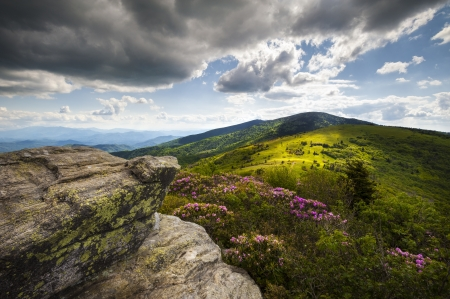 Roan Mountain Highlands landscape with rhododendron flowers during NC Spring Blooms at Jane Bald along the Appalachian Trail Stock Photo