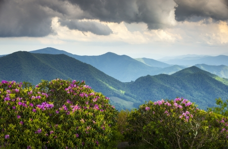 Blue Ridge Appalachian Mountain Peaks and Spring Rhododendron Flowers Blooming along the Appalachian Trail in Western NC photo