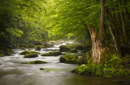 Peaceful Great Smoky Mountains National Park foggy Tremont River relaxing nature landscape scenics near Gatlinburg TN photo
