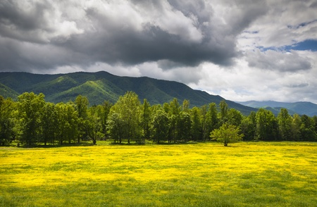 Cades Cove Spring Flowers Great Smoky Mountains National Park Fields with dramatic sky and Appalachian mountain peaks Stock Photo
