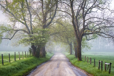 great smoky national park: Great Smoky Mountains National Park Cades Cove Foggy Country Road in early morning Stock Photo