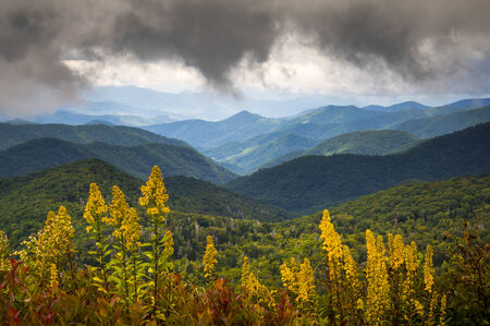 Blue Ridge Parkway NC Photography North Carolina Scenic Landscape featuring goldenrod in bloom at the start of autumn in the Appalachian Mountains