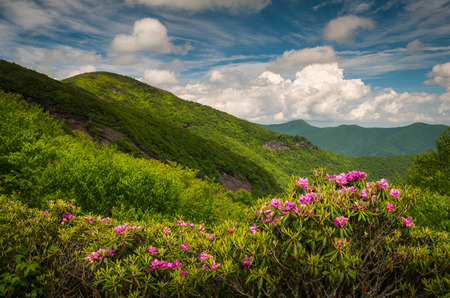 wnc: Asheville North Carolina Blue Ridge Parkway Spring flowers scenic mountain landscape in the southern Appalachians
