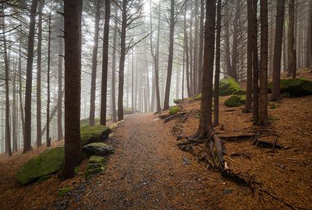 アパラチアン トレイル ノースカロライナ屋外森林ハイキング魯山ノースカロライナおよびテネシー州の国境に近い 写真素材